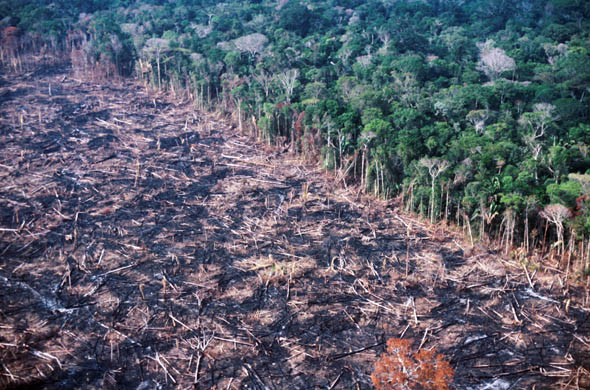 deforestation in america essay