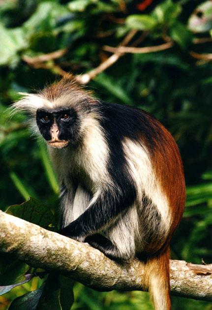 包括猎杀灵长类动物作为食物以及非法的野生动物贸易