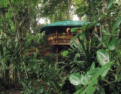 The Tree House Hotel. Treehouse Hotel, Punta Uva,