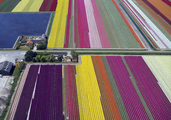 Netherlands: Tulip fields