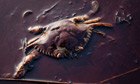 A dead crab sits among the oil from the Deepwater Horizon oil spill
