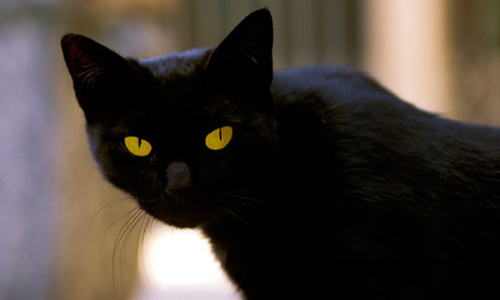 Italian cat inherits €10m fortune | World news | The Guardian