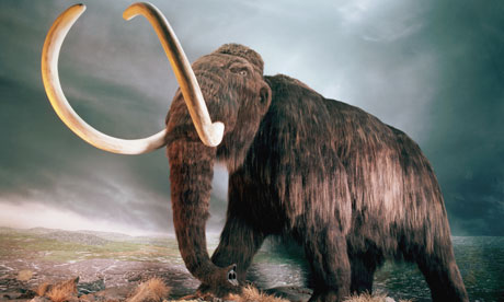 Woolly Mammoth Replica at Museum Exhibit