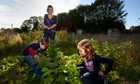 Sarah Hall with her children Jack, 2, and Ella, 5, collecting raspberries on their allotment