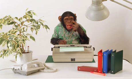 Savanna chimpanzee in the office / Pan troglodytes