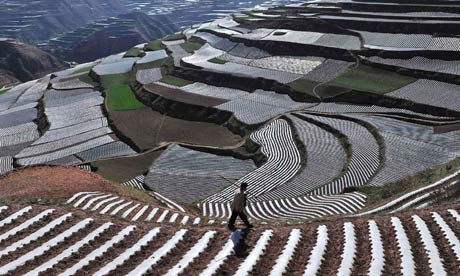 A farmer walks past a terrace of dang shen, a traditional Chinese medicine, in Gansu province