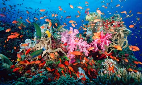 A tropical coral reef