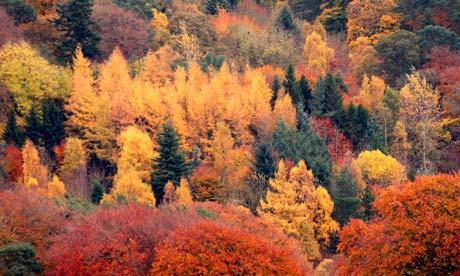 Autumn colours prediction