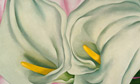 Two Calla Lillies on Pink by Georgia O'Keeffe