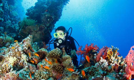 A diver exploring the coral reef surface