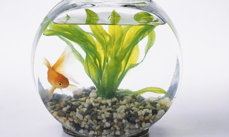 If fish do not belong in fish bowls then where for How to make a fish bowl