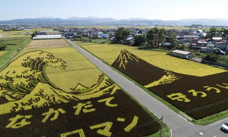 Japanese farmers have created rice-fields art designs