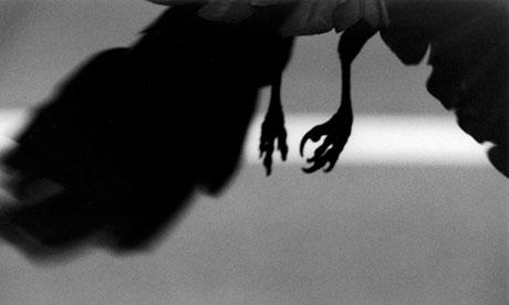 Ravens by Masahisha Fukase