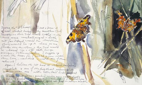 David Measures butterfly sketch and diary entry