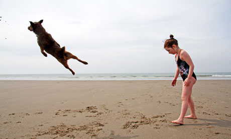 A dog leaping on Aberdovey beach