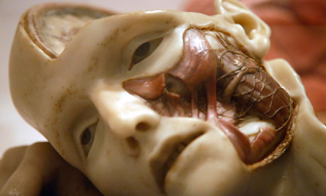 Anatomical model of a human head