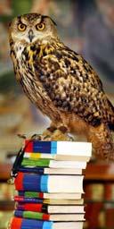 Owl on Harry Potter books