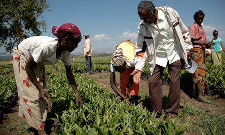 Workers at an 11,000 hectare farm in Bako, Ethiopia, run by the Indian company Karuturi.