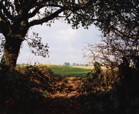 Richard Billingham's <em>Hedgerow (New Forest)</em>, 2003.