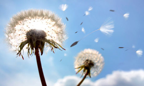 http://static.guim.co.uk/sys-images/Books/Pix/pictures/2013/6/17/1371473810666/Dandelion-seeds-in-flight-010.jpg