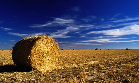 A hayfield under a blue sky