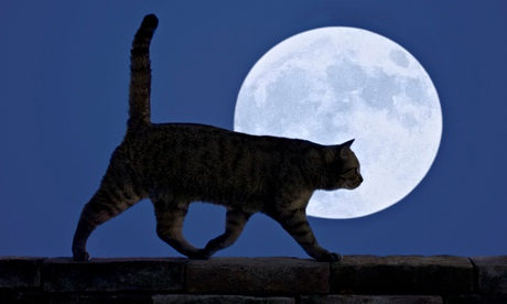 A cat walking at night