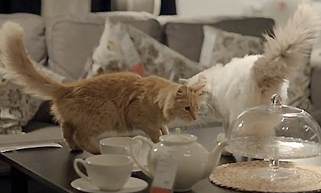 IKEA Advertisement - Cats