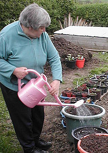 Pensioner Christine Hewitt at her allotment.