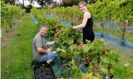 Plumpton's wine-making graduates have top jobs in vineyards across the globe