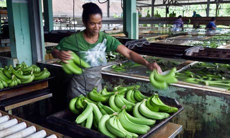 Sorting and washing of bananas at Le Limbe banana plantation in Martinique
