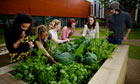 Students from the Urban Gardening Society at Manchester Metropolitan University