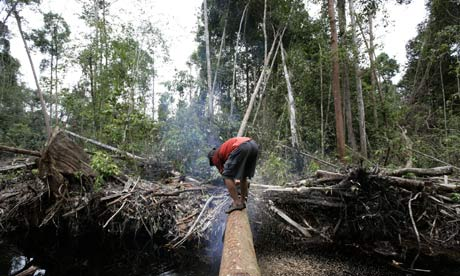 Indonesian rainforest is felled for a plantation. Palm oil by-product