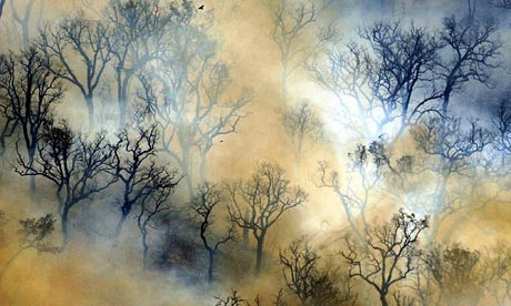 COP15 climate change: drought and forest fires in Portugal
