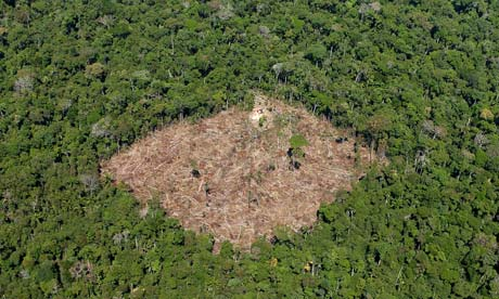 COP15 : REDD and deforestation in Brazil, Para state
