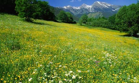 pyrenees-001.jpg