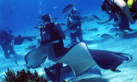 Divers at Stingray City