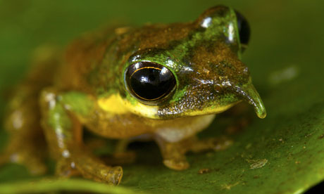 new species discovered in Foja Mountains rainforest on the Indonesian island of New Guinea