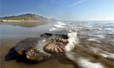 Wildlife quiz :  Ammonite Fossil On The Beach At Charmouth Beach, Dorset