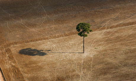 Biodiversity in focus : deforestation in Brazil