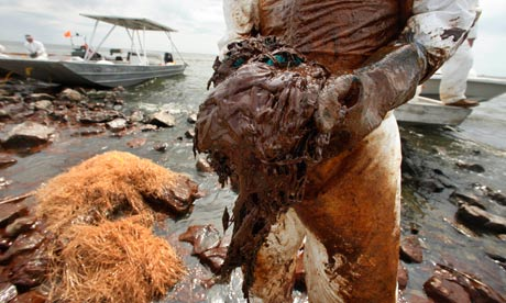 A clean-up operation on Queen Bess Island, June 2010. BP pledged a $500m fund for independent research into the consequences of the Gulf of Mexico oil disaster. Photograph: Gerald Herbert/AP
