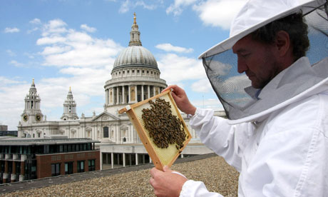 Thousands of bees have been installed in a beehive on the roof of St Paul's Cathedral