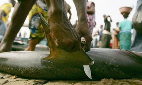 Biodiversity 100: Shark fin