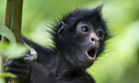 Week in wildlife : Orphan spider monkey