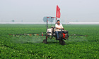 Worker spreading pesticide on a cotton field in Henan province, China