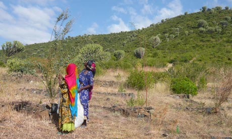 Agriculture in Ethiopia : Technologies and soil conservation