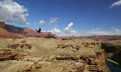 Endangered Condors Threatened With Lead Poisoning Grand Canyon National Park