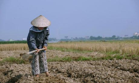 MDG : Aid budget : Vietnam