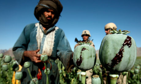 MDG : Drugs and development :  opium in a poppy field in a village in Golestan district
