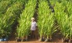 Land grab : Karmjeet Sekhon, manager of Karuturi giant farm in  Gambella region