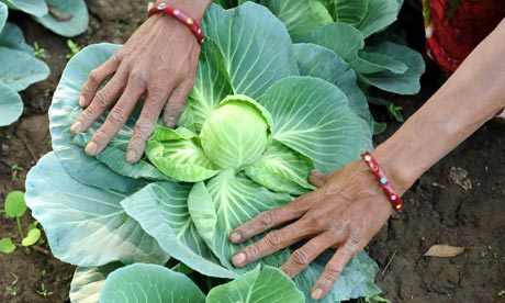 MDG : Organic farming in India